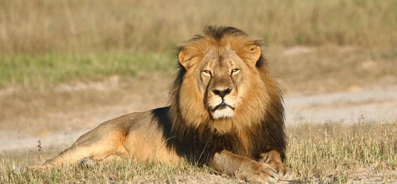Kamu volt Jericho, a zimbabwei oroszlán halálhíre