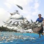 Kevesebben éheznének: 6x több élelmet is biztosíthatnának az óceánok, mint jelenleg