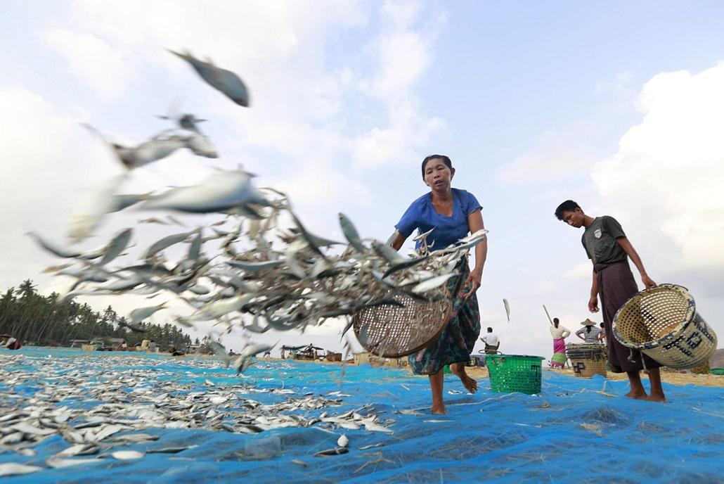epa.16.05.01. - Tandve, Mianmar: Frissen fogott apró halak szárítás előtt a földre terített hálóra Tandve kikötőjében.  - 7képei