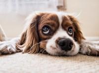 Aki kutyát akar tartani Bécsben, tanfolyamot kell végeznie