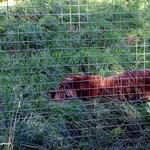 Emberölő tigris, ötszáz elhullott állat: bezárják az angliai horrorállatkertet