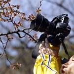 Virágzik a cseresznye Tokióban - galériával