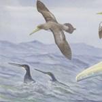 62 millió éves furcsa madár maradványaira bukkant egy amatőr őslénykutató