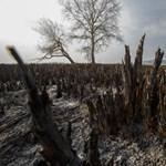 Négy év alatt megduplázódott a kiirtott nádasok területe a Balatonnál