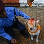 Meg akarta védeni, de véletlenül lelőtte saját kutyáját a rendőr