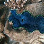 Elkészítették a Nagy-korallzátony virtuális térképét