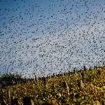 A madarak szervezetébe is jutnak antidepresszánsok, meg is változik tőle a viselkedésük