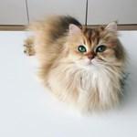 Fotók: Állítólag ő a világ legszebb cicája