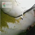 Mocskos egértanyán gyártottak reform-élelmiszereket Szegeden – videó