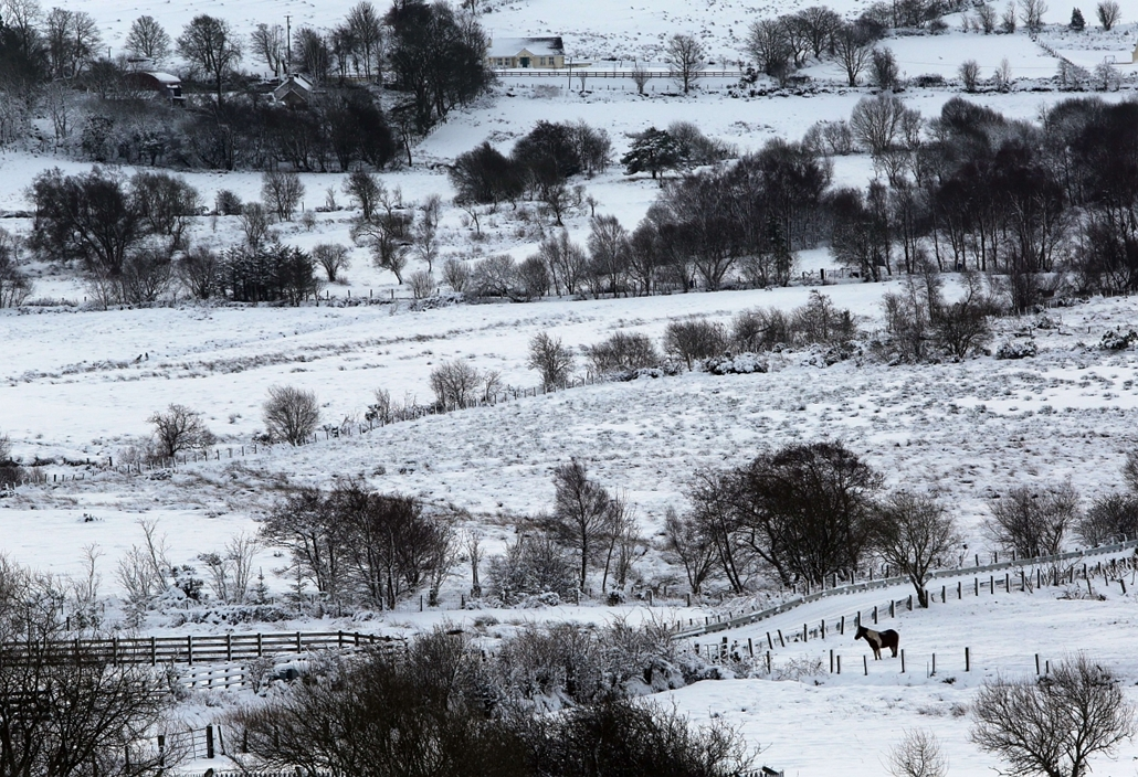 afp. Londonderry, Egyesült Királyság, 2015.01.14. A horse in a field after heavy snow fall near Londonderry (Derry) in Northern Ireland on January 14, 2015. More than 100 schools and nurseries have been shut and many roads closed as snow and wintry weathe