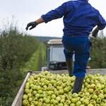 Bukhatja-e a családi gazdálkodói besorolást az, aki heti 10 órára elmegy máshova is dolgozni?