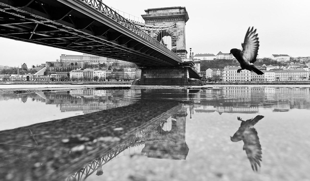 Madárlátta Budapest