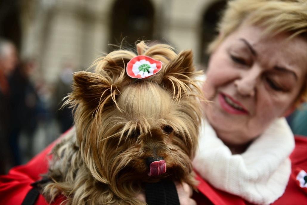 SA. 2014. március 15. Nemzeti ünnep, Budapest, kutya, kokárda