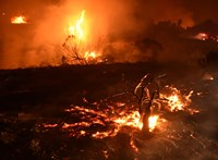Egy hónapig várta gazdáját egy kutya a kaliforniai tűzvészben leégett romok között