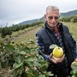 """""""Mit csinálnék Alaszkában a gyümölcsösöm nélkül? Bele is halnék"""""""