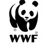 Magyar párt kampányol a pandás logóval, kiakadt a WWF – fotók
