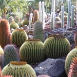 Csodálatos kaktuszkert a Kanári-szigeteken