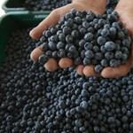 Csökkentheti a mellrák kockázatát egy finom savanykás gyümölcs