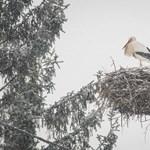 A vártnál korábban érkezett az első gólya