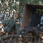 Videómajom szabadult a brazil dzsungelre