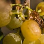 Magyar borokat árulnak Londonban