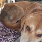 Már benőtt a kutya nyakába a lánca Sajóládon, mikor a rendőrök megtalálták