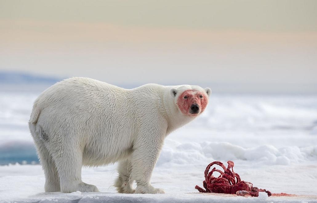 NE használd_! - Photographer of the Year 2014 - ''Wild & Vibrant'' kategória - 1. helyezett - nyolcvan fokra Északtól - Spitzbergák, Sarkvidék - tpoty
