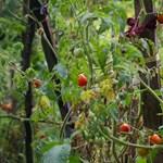 Boldog helyen szeretnénk élni? Küldjünk mindenkit kertészkedni