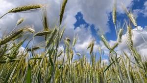 Mégsem akkora klímagyilkos a mezőgazdaság?