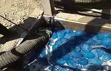 Medúzák ezrei okoztak gondot egy izraeli szénerőműnél