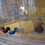 A rendőrség cáfolja az apa sztoriját a bokorban talált csecsemőről
