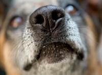 Ráuszította a kutyáját a rendőrökre a szabolcsi férfi