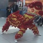 Edzőcipős oroszlán ijesztgette a ferihegyi utasokat