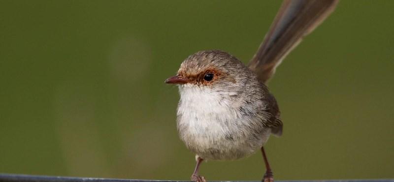 Érdekes kisérletből derült ki: képesek megtanulni egymás nyelvét a madarak