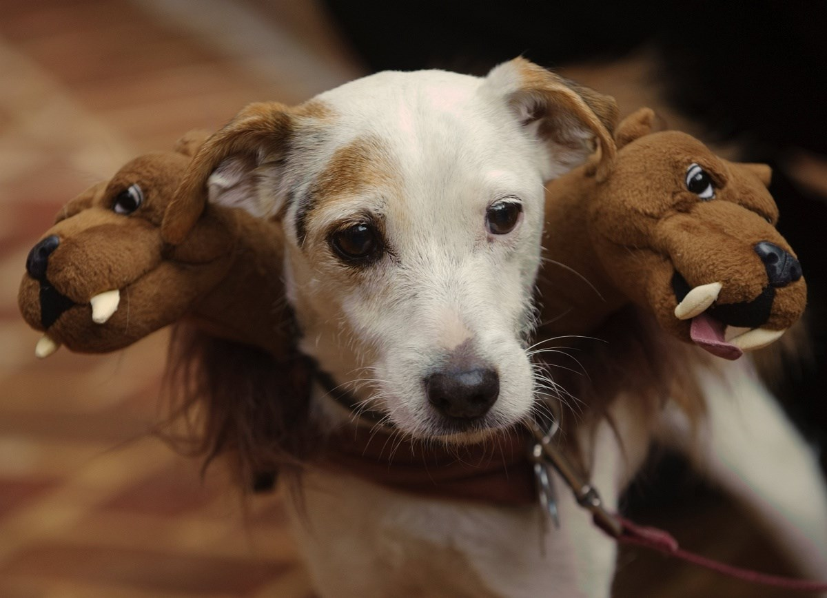 Fotók: rémisztő kutyajelmezek halloweenre
