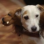 Itt a csókolózós videó újabb paródiája, kutyákkal