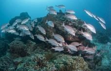 Radikálisan felforgatja a tengeri táplálékláncot a globális felmelegedés