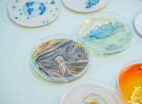 Díjat nyertek magyar mikrobiológusok a baktériumból készült festményeikkel