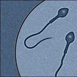 A jó spermaszám fontosabb, mint a karrier