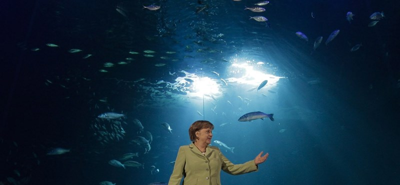 Lassulhat a német gazdaság