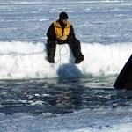 Hallgassa meg: 28 összetett hanggal beszélgetnek a 6 méteres kardszárnyú delfinek