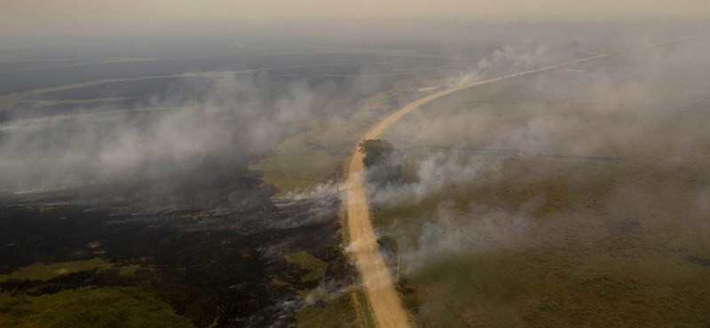 Tüzes pokollá vált a Föld egyik különleges élőhelye