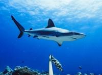 A klímaváltozás miatt lehet több cápatámadás