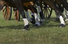 Három gyerek is van a szajoli lovasbaleset sérültjei között