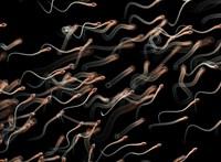 Megvizsgálták, mi történik a spermával az mRNS-oltások után – megvannak az eredmények