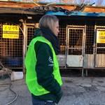 Állatvédők diadala: bezár Dél-Korea legnagyobb, brutális módszereket alkalmazó kutyavágóhídja