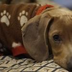 Magányos kutyáknak készített playlisteket a Spotify