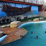 Nézd otthonról a szegedi pingvinek őrültségeit!