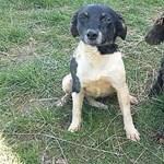 Hat és fél millió forint sok vagy kevés két elveszett kutya megtalálására?