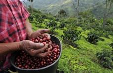 A Nespresso bejelentette, hogy 2 éven belül karbonsemleges lesz minden csésze kávéja